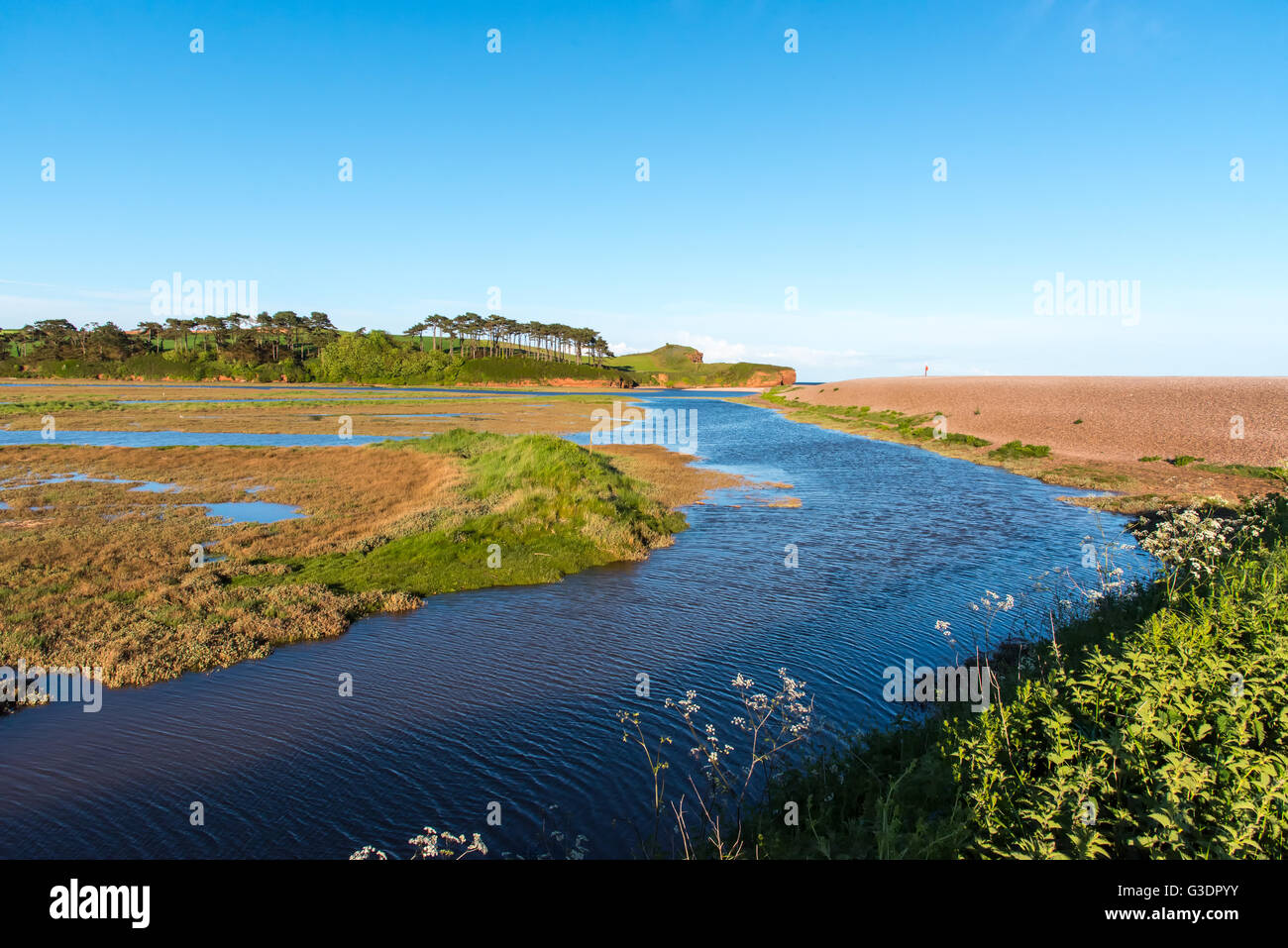 The Saltings, a salt marsh at the mouth of the River Otter, near Budleigh Salterton, Devon. Stock Photo