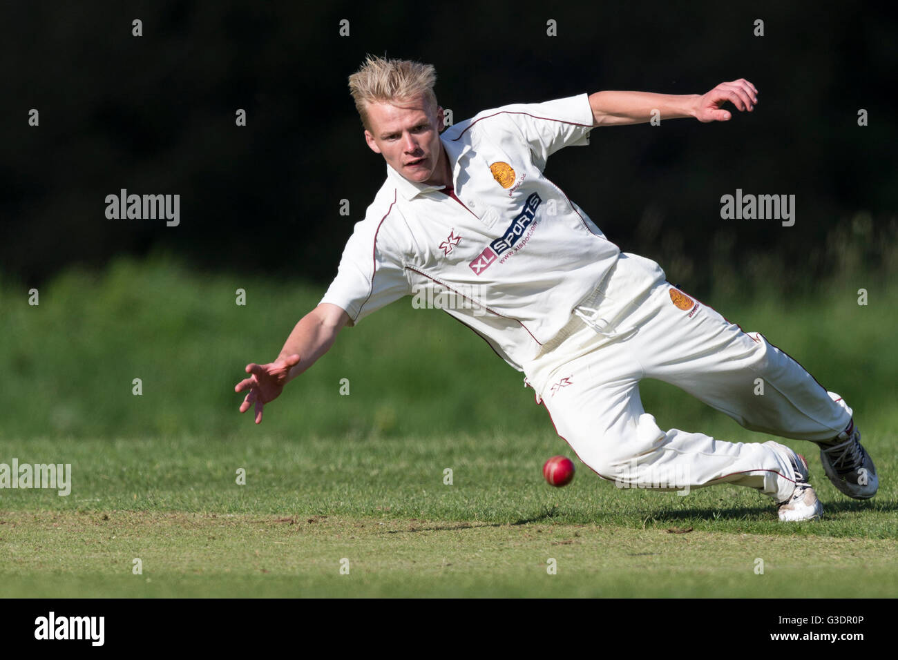 Witchampton CC 1st XI versus Marnhull CC 1st XI ,  Ashley Young of Marnhull diving to stop ball. - Stock Image