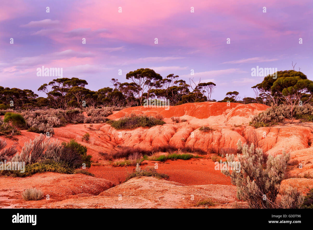 Dried billabong water hole in red soil australian outback of Western Australia at sunset. Dry arid ground with rare - Stock Image