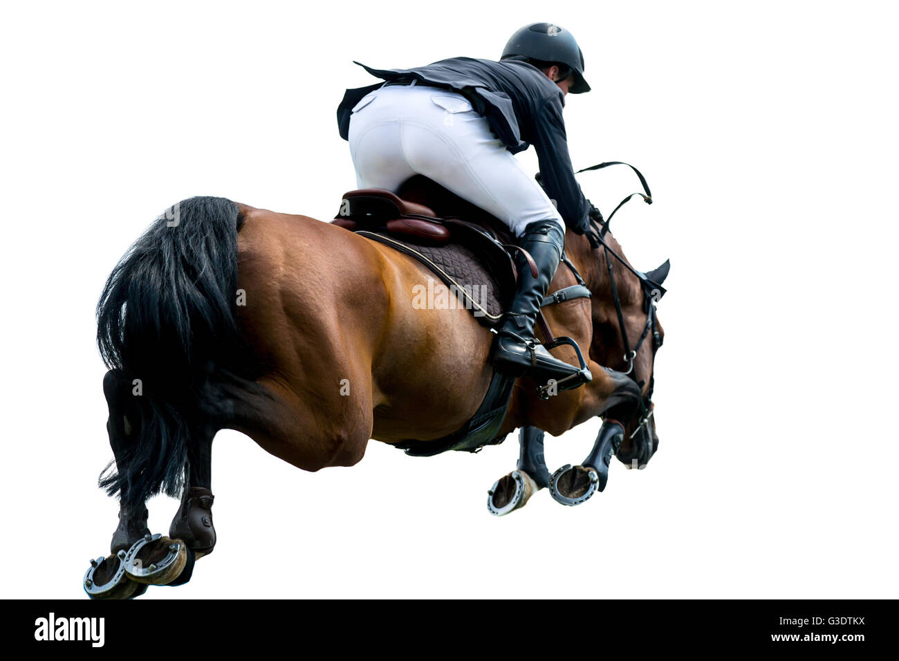 Horse Jumping, Equestrian Sports, Isolated on White Background - Stock Image