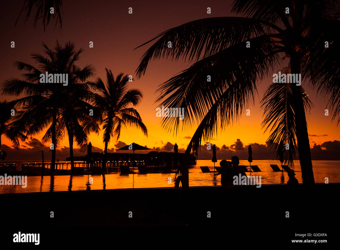 Tropical beach background with palm trees silhouette at