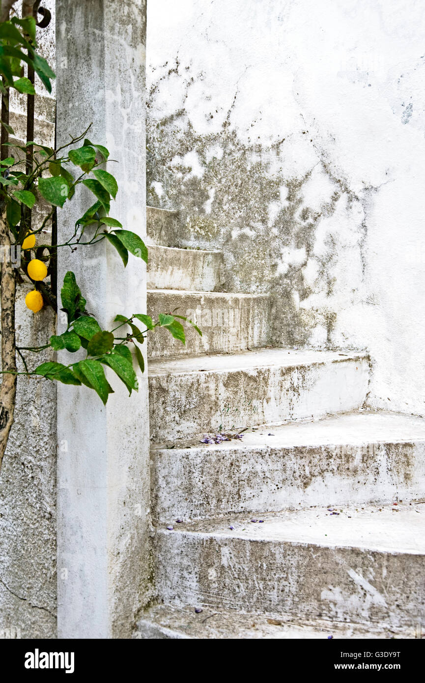 White and weathered exterior staircase with lemon tree - Stock Image