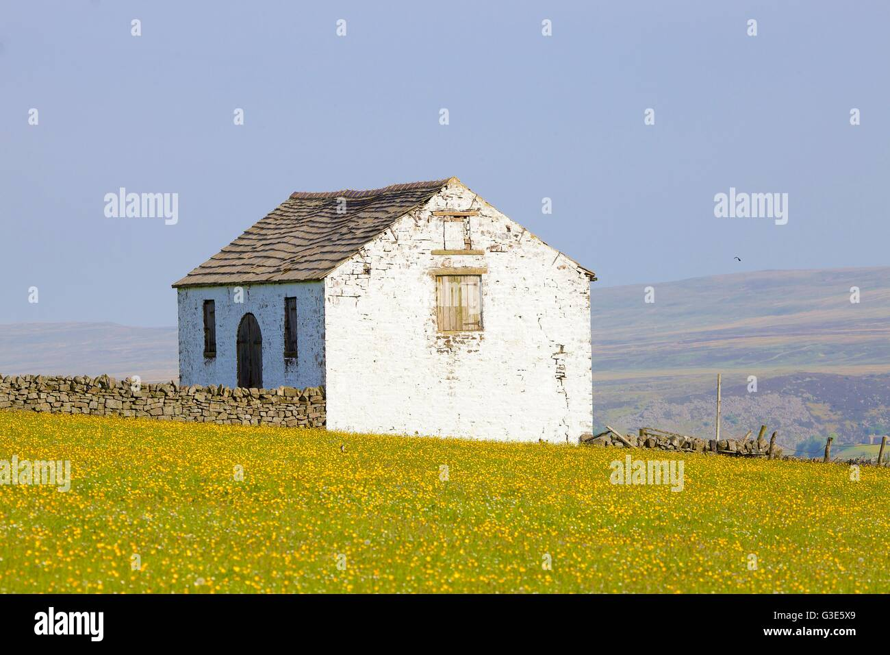 White barn in flower meadow. Forest in Teesdale, North Pennines, Durham Dales, County Durham, England, United Kingdom, - Stock Image