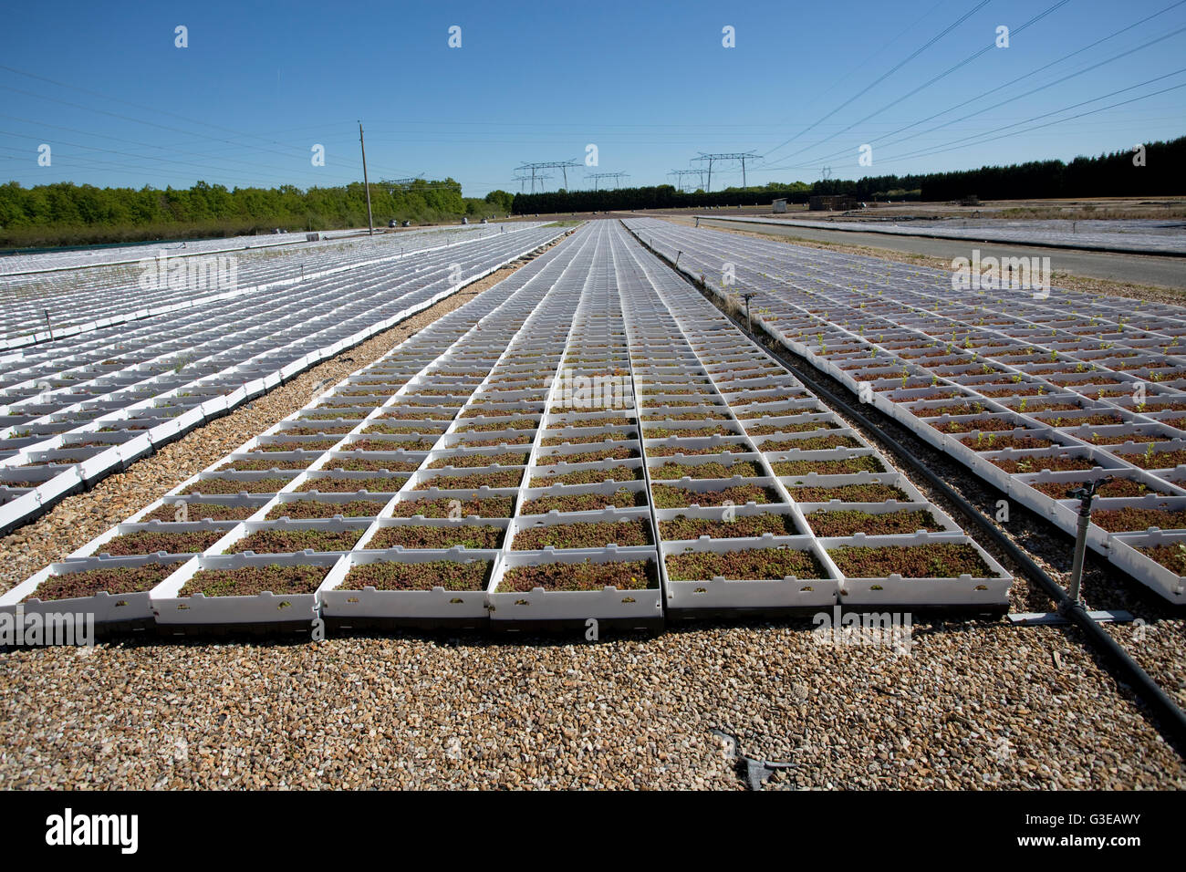 Plants growing in rows of boxes on ground next to Dampierre nuclear power station France - Stock Image