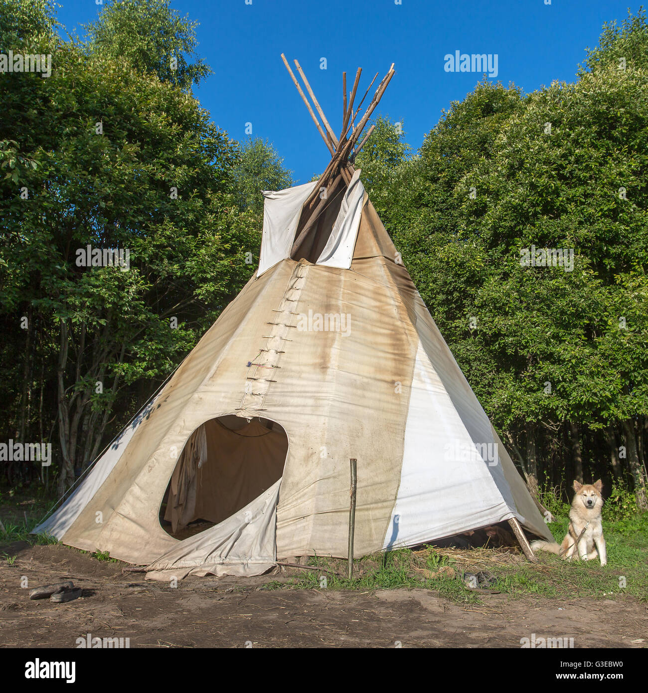 A single, solitary teepee in a forest. Tepees were traditional housing for Native Americans in Great Plains and - Stock Image