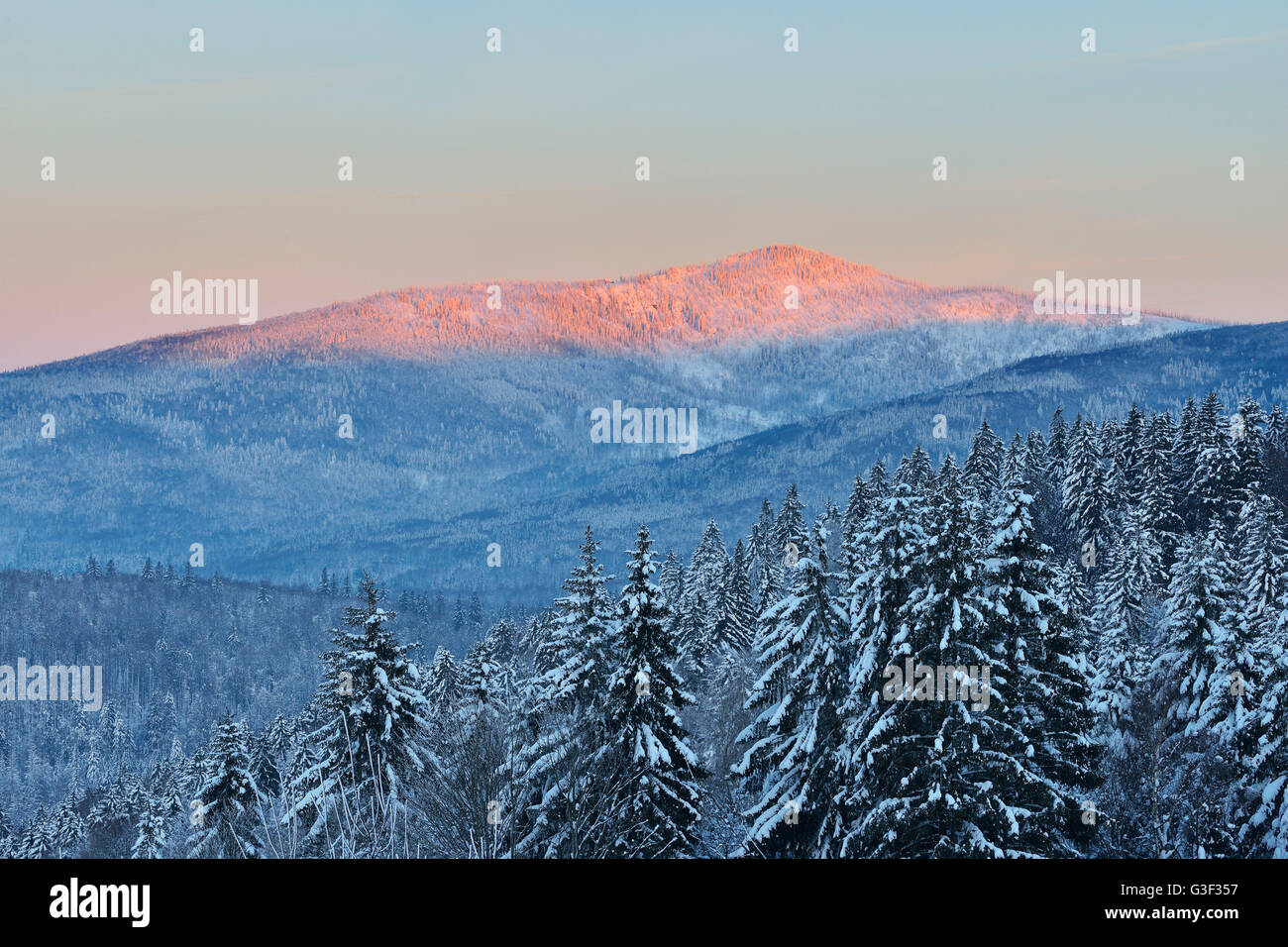 Conifer Forest at Dawn, Winter, Grafenau, Rachel, National Park Bavarian Forest, Bavaria, Germany Stock Photo