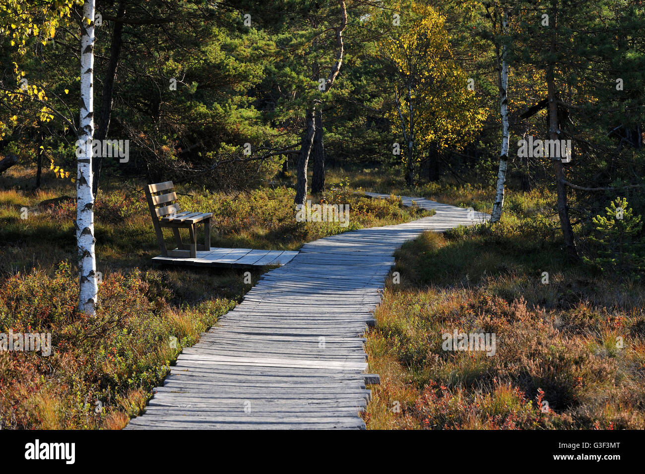 Wooden Planks Path with Bench in Bog, Autumn, Schwarzes Moor, Fladungen, Rhoen Mountain, Bavaria, Germany - Stock Image
