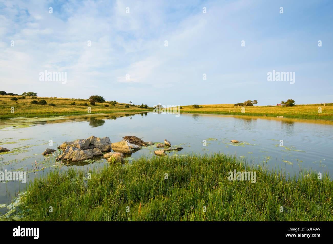 Inland Lake in Summer, Fyns Hoved, Hindsholm, Kerteminde, Funen, Baltic Sea, Denmark - Stock Image