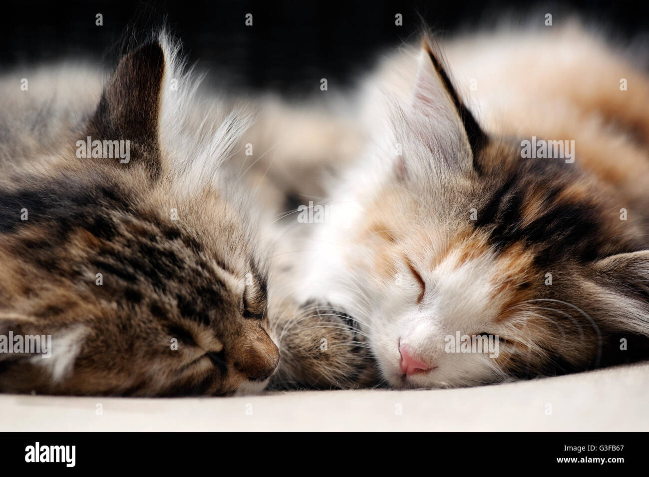 Sleeping Kittens - Stock Image