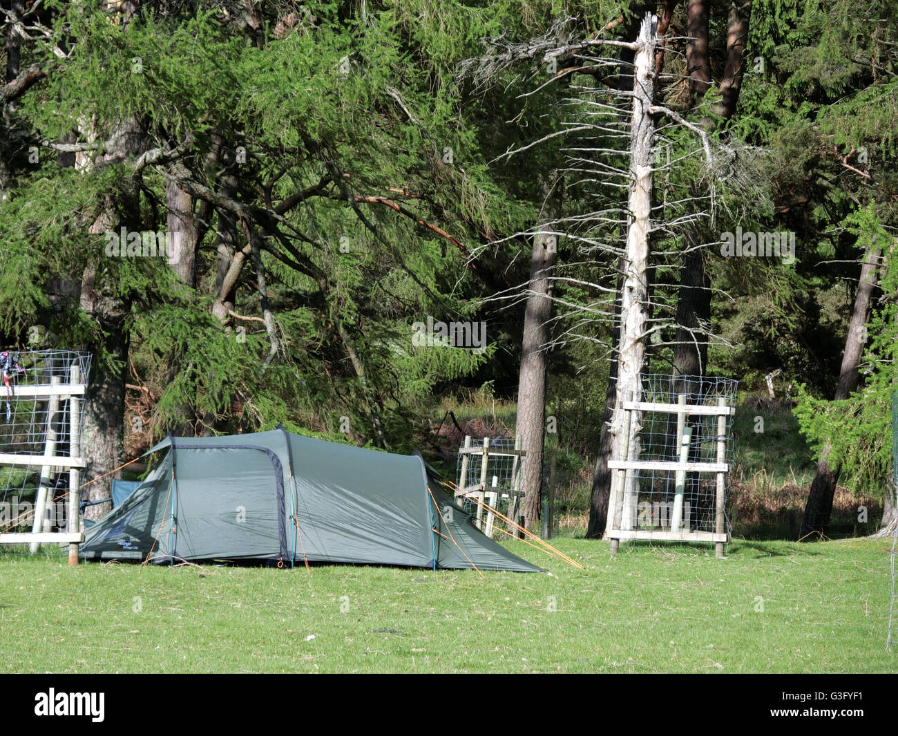 Canvas Tent On A Camping Holiday, March Wood, Upper Yarrow Valley, Borders, Scotland, UK - Stock Image