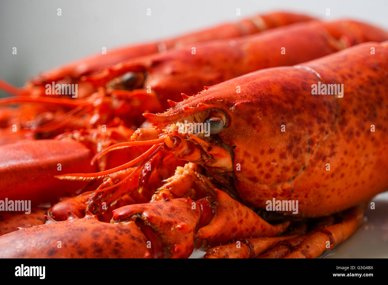 Cooked red Lobsters served on white plate ready for eating - Stock Image