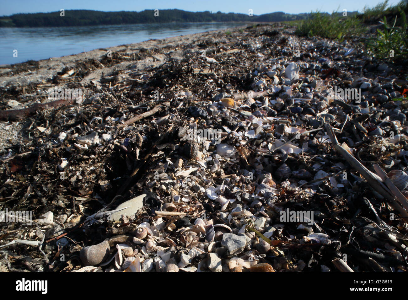 Closeup of tidewrack on the shore of Vejle Fjord in Denmark. - Stock Image