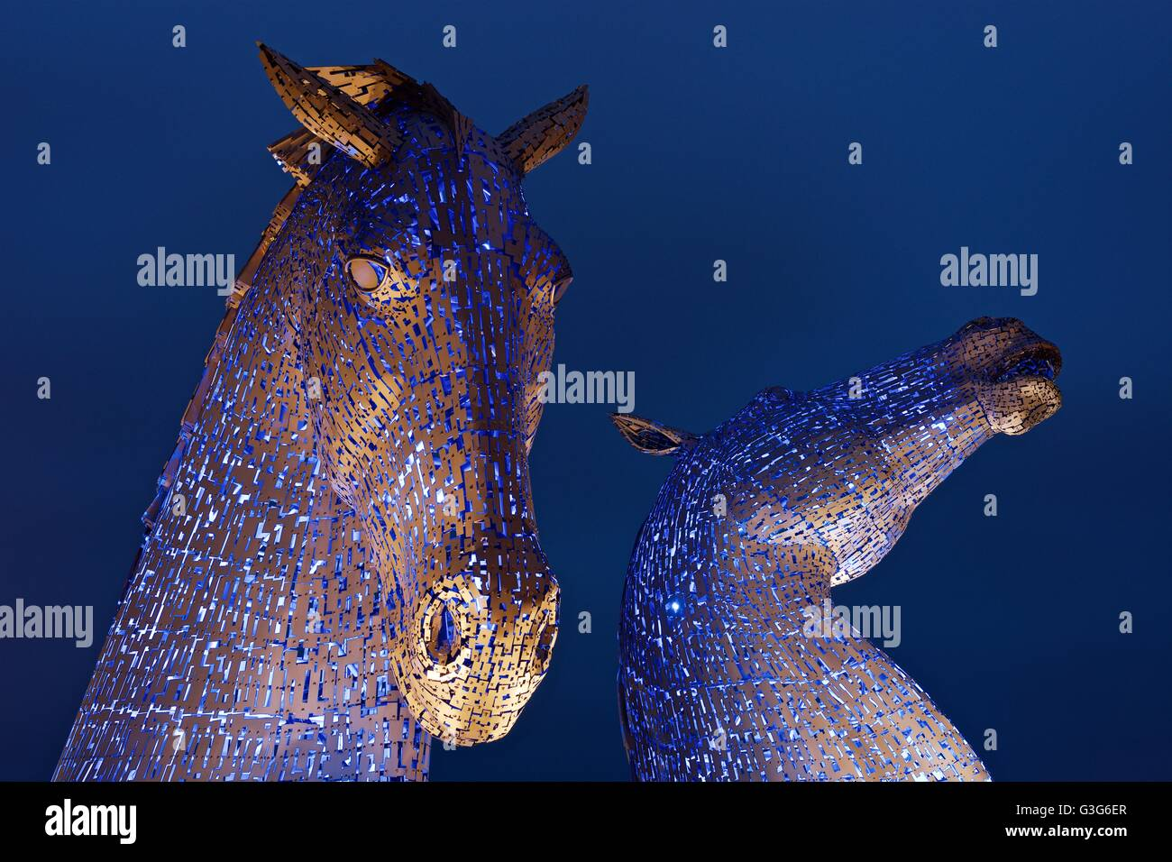 A colour image taken of the two Kelpies at the Kelpies in Helix Park Falkirk lit in blue during the evening twilight - Stock Image