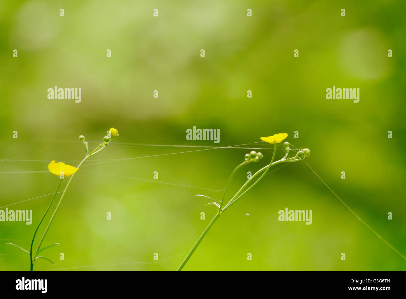 Small Yellow Flowers On A Background Of Green Grass Stock Photo