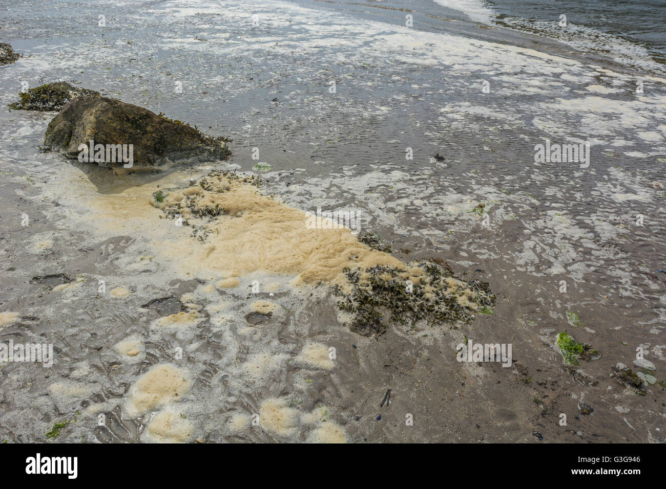 Polluted UK beach with dirty sea foam at the shore's edge - metaphor for environmental pollution, polluted water, - Stock Image
