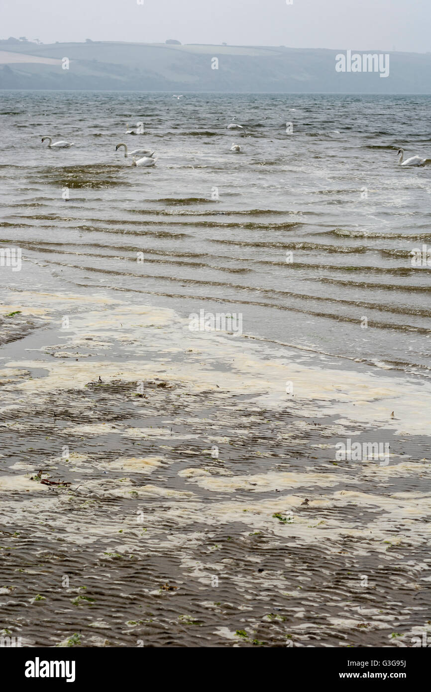 Polluted UK beach with dirty sea foam and water  - metaphor for environmental pollution, polluted water, dirty beach. Stock Photo