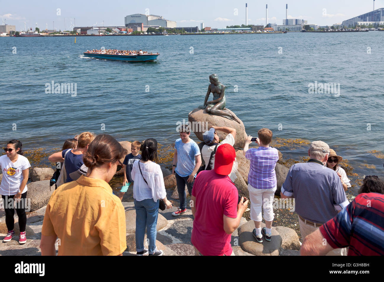 Copenhagen Harbour, Denmark. 25th June, 2016. The Little Mermaid at Langelinie was much courted today. A new record Stock Photo