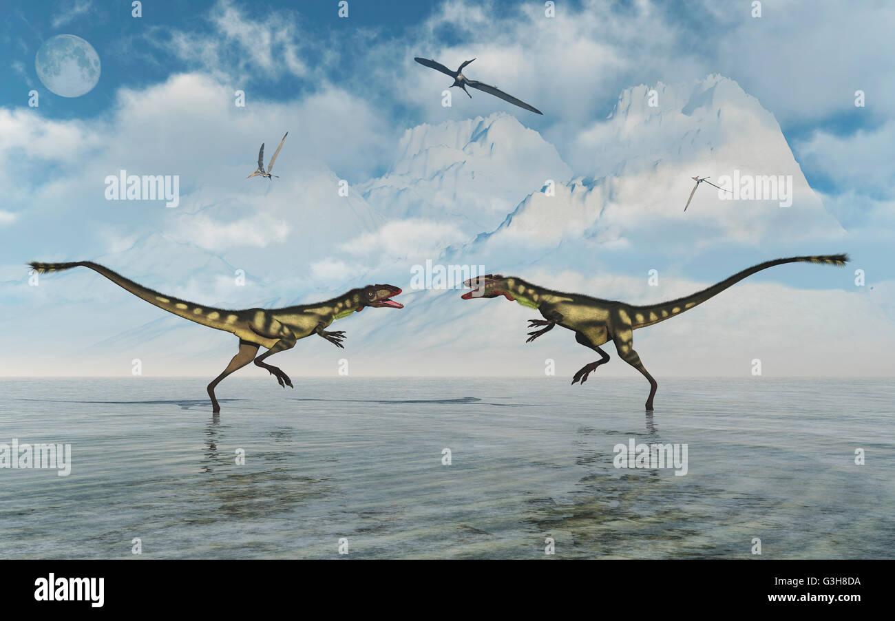 Dilong Dinosaur Confrontation. Stock Photo