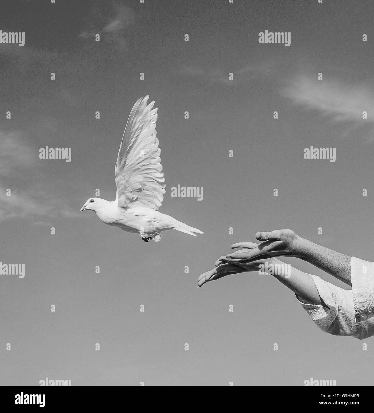 Woman releasing white dove into sky - Stock Image