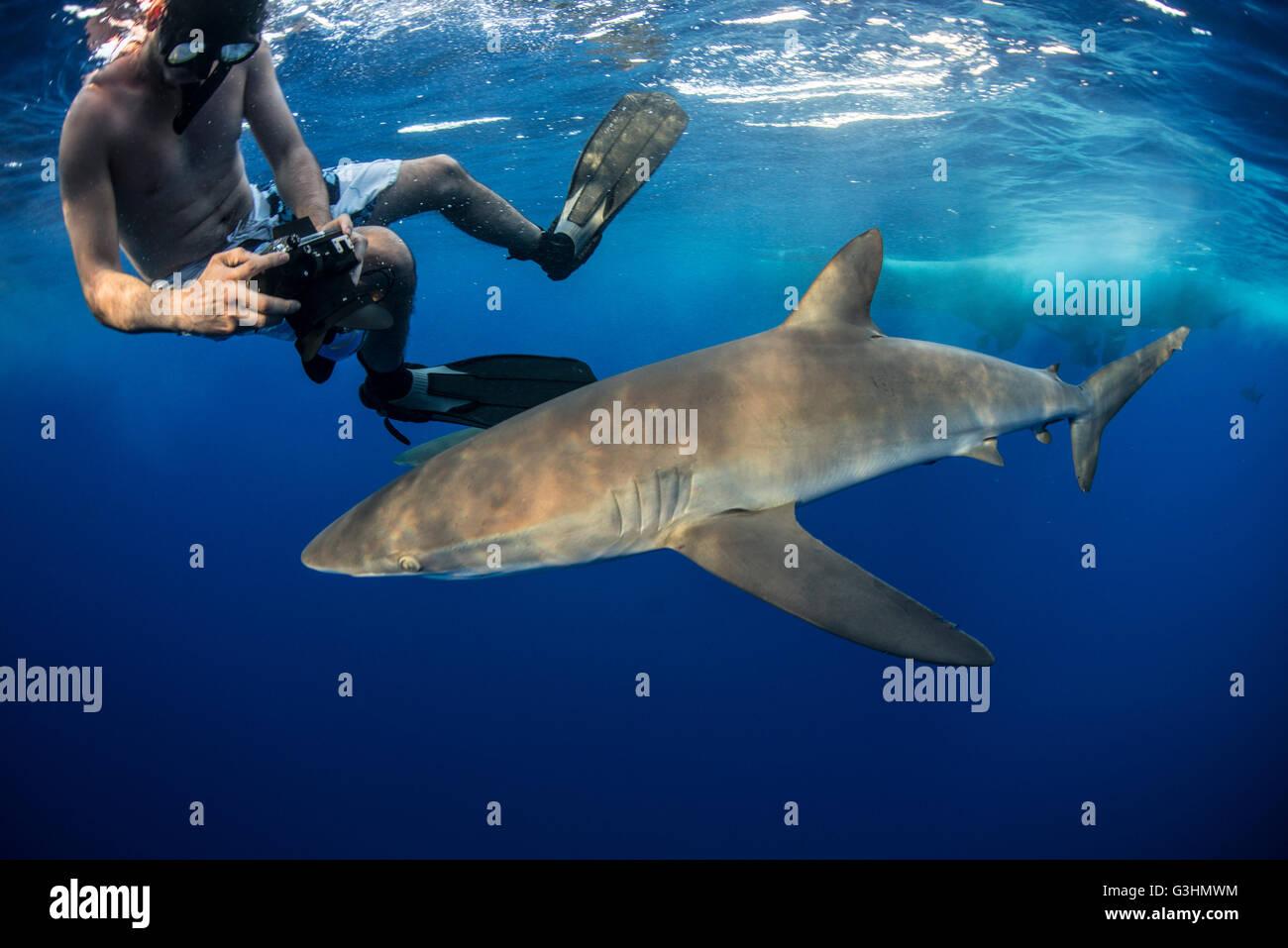 Snorkeler photographing a silky shark (Carcharhinus falciformis), Roca Partida, Colima, Mexico - Stock Image