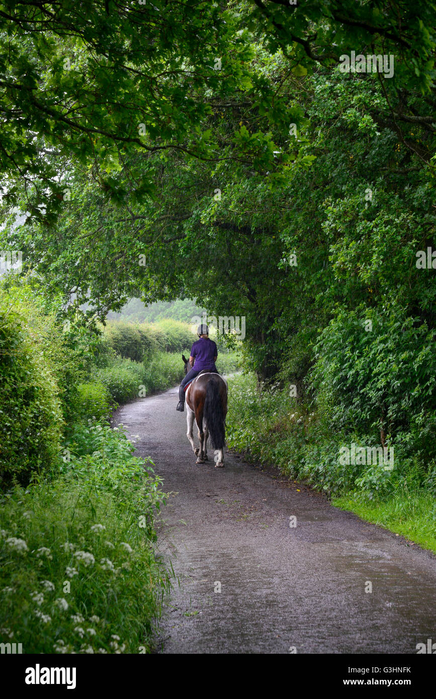 Horse rider on a country lane on a rainy summer day. - Stock Image