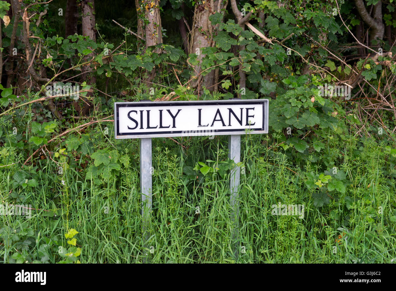 Silly Lane, road sign, Lowgill, Lancashire, UK - Stock Image