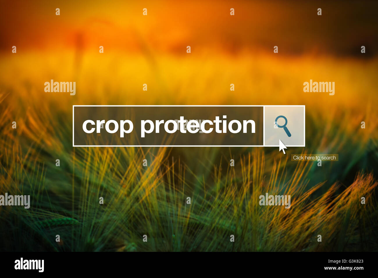 Crop protection in internet browser search box, barley field in background - Stock Image