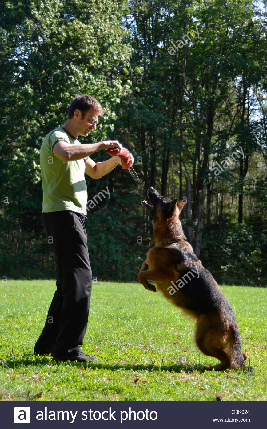 Master and his obedient German Shepherd dog - Stock Image