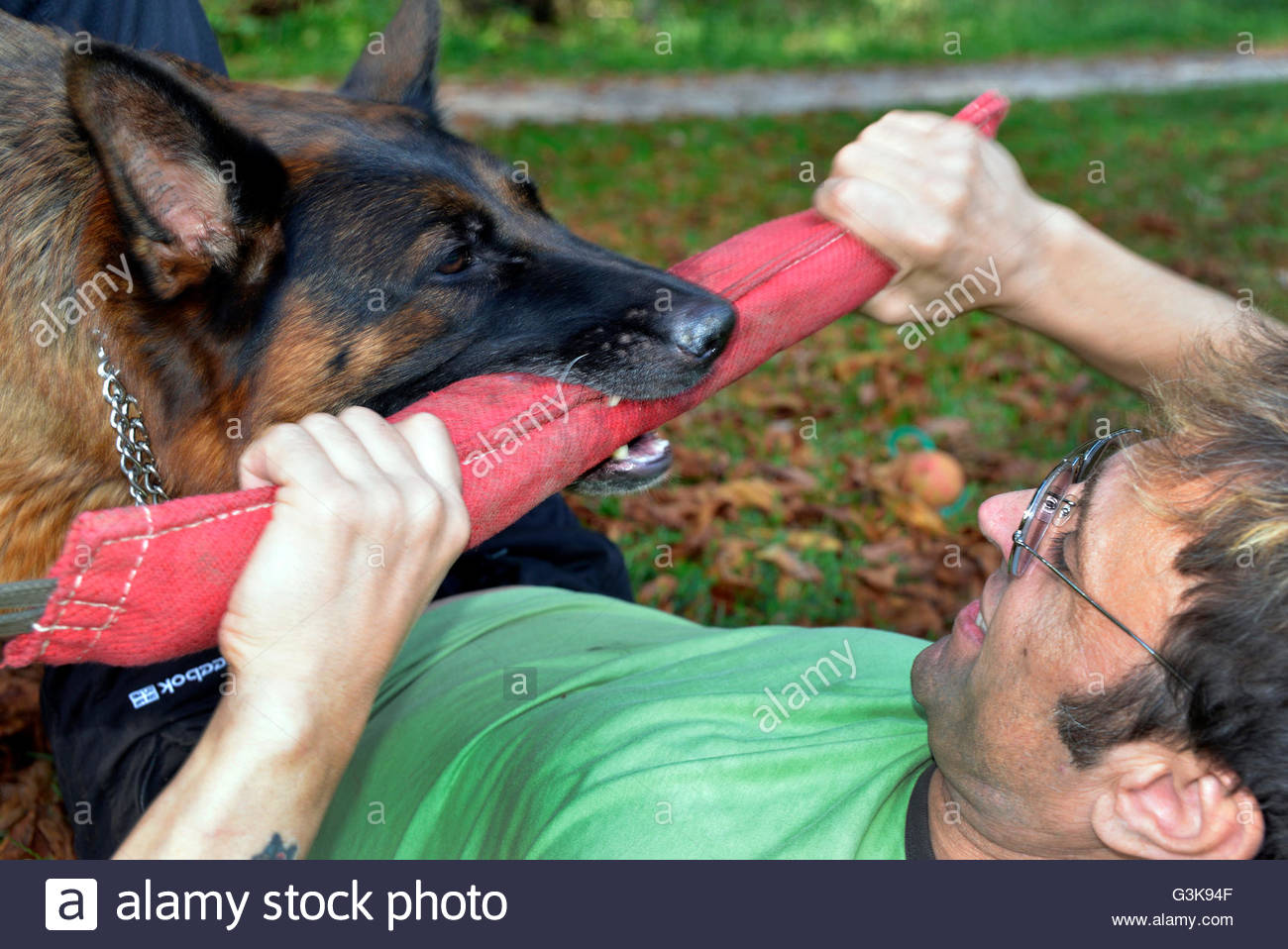 Master and his obedient German Shepherd dog bite training exercise - Stock Image