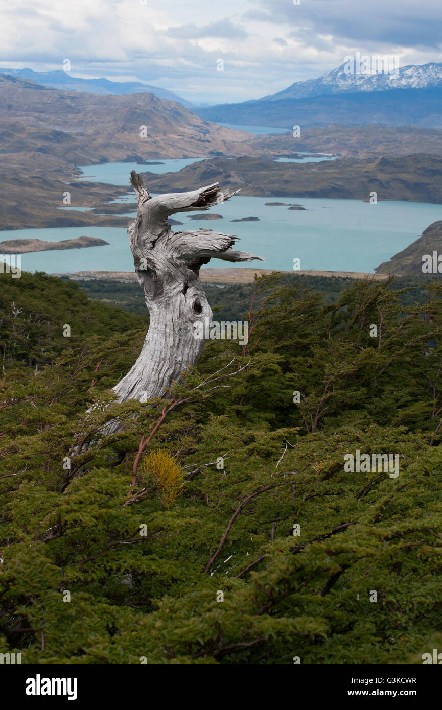 View of the Lake Nordenskjold and a petrified tree from the French Valley lookout in Patagonia, Chile. - Stock Image
