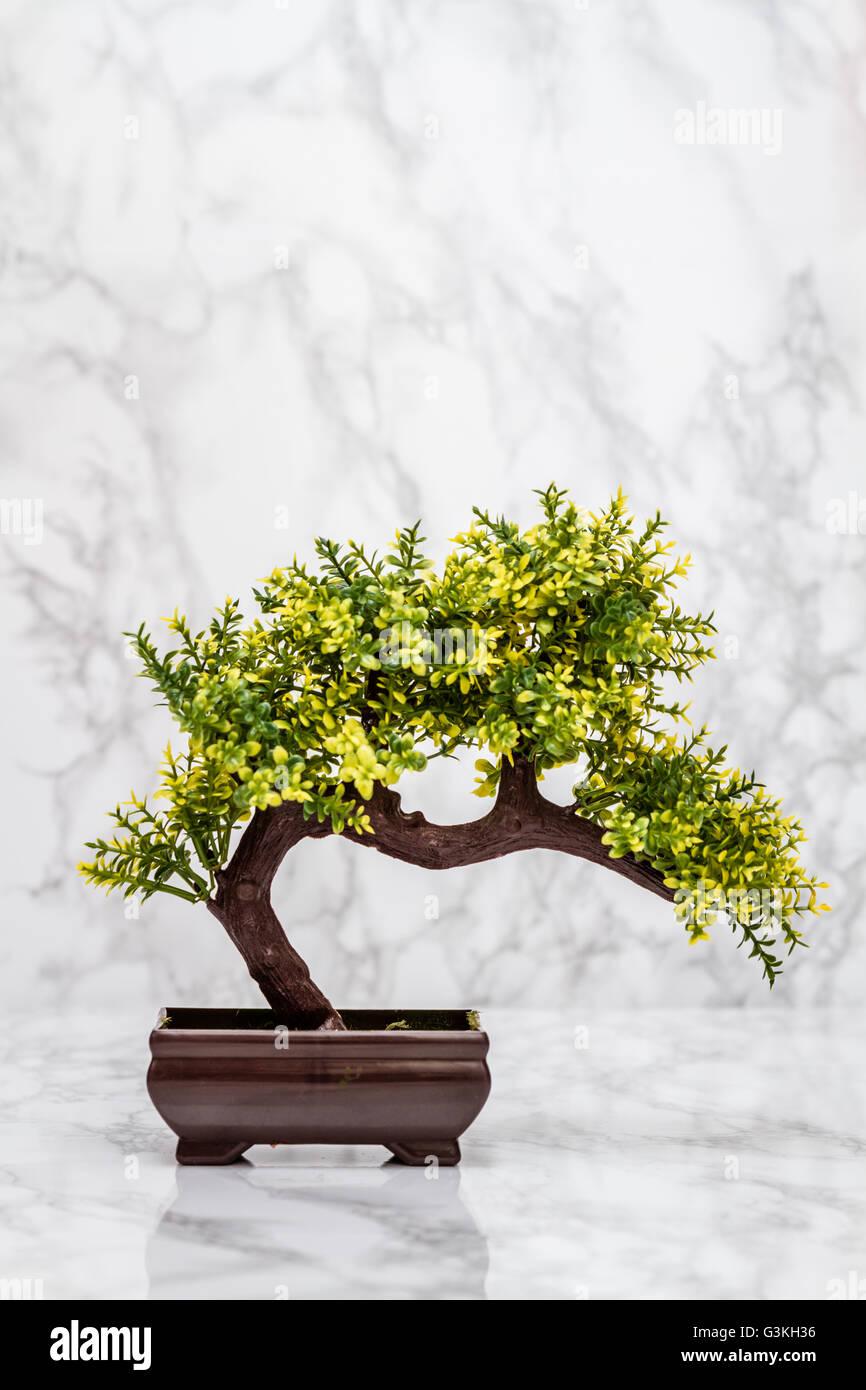 Small artificial bonsai tree on white marble background stock photo small artificial bonsai tree on white marble background mightylinksfo