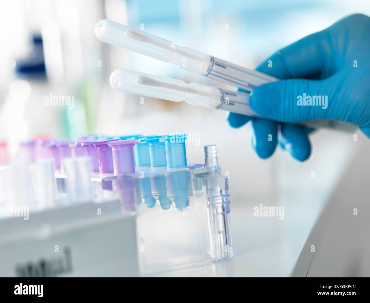Scientist preparing a DNA swab for analysis in a laboratory for forensic or paternity testing - Stock Image