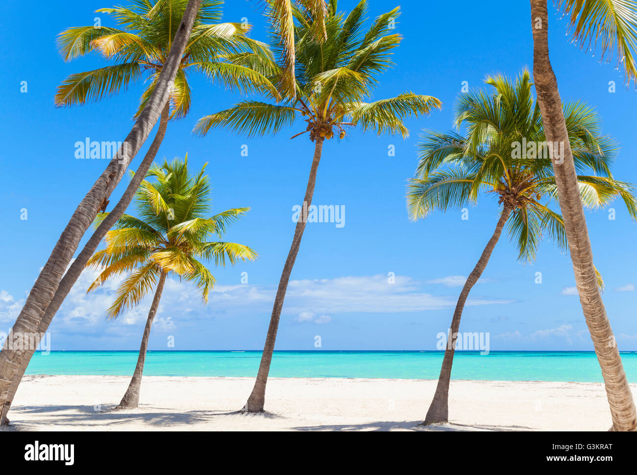 leaning palm trees on beach dominican republic the caribbean stock