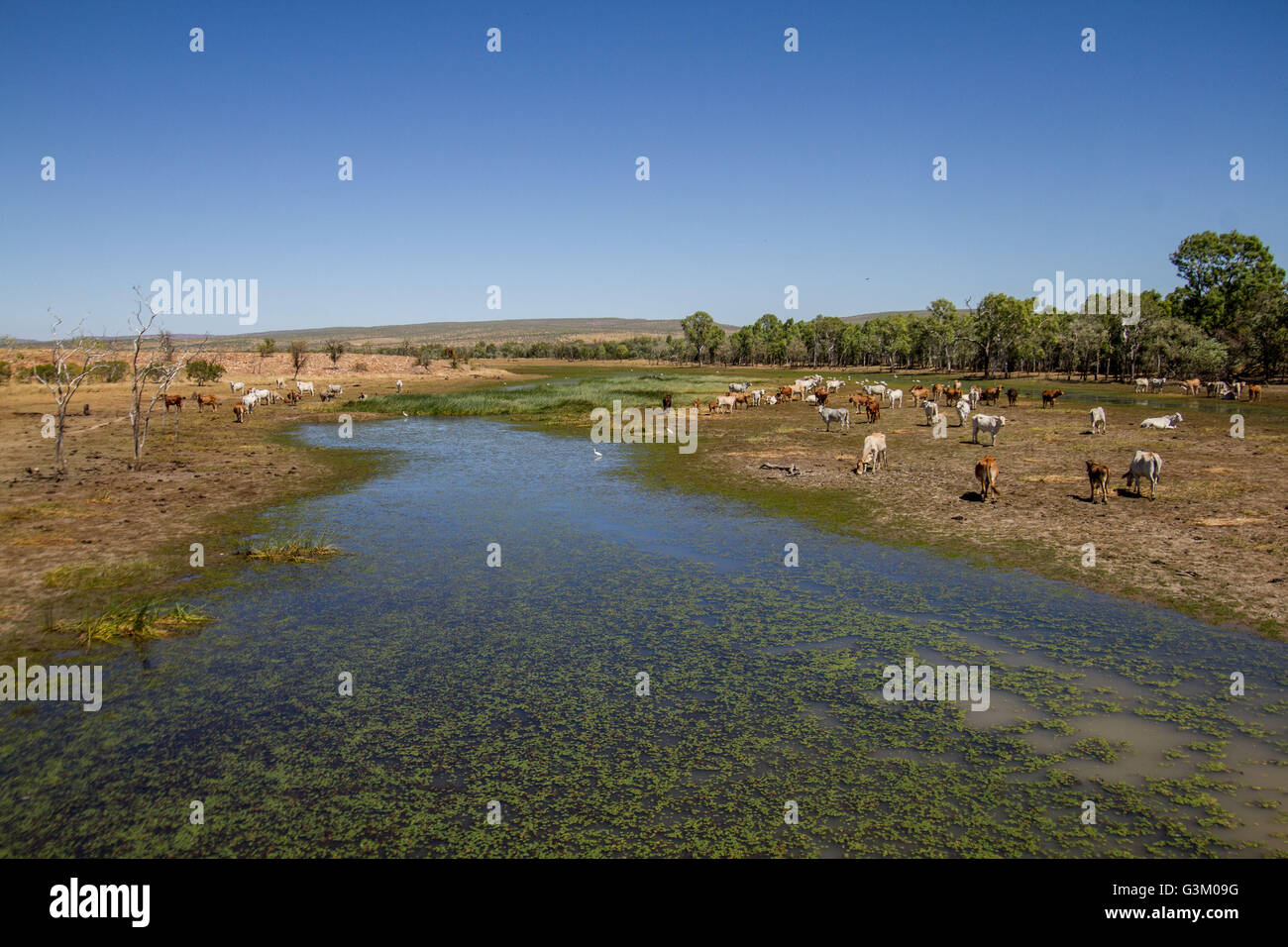 A billabong in the Australian outback - Stock Image