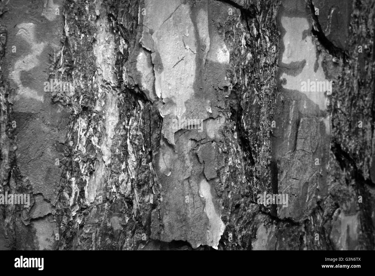 Macro Bark in Black and White - Stock Image