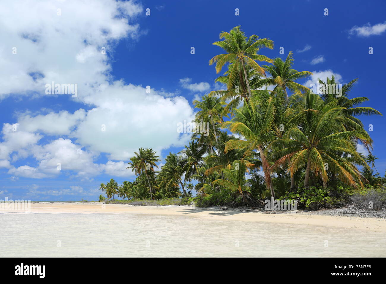 Coconut palms at the beach, Christmas Island, Kiribati - Stock Image