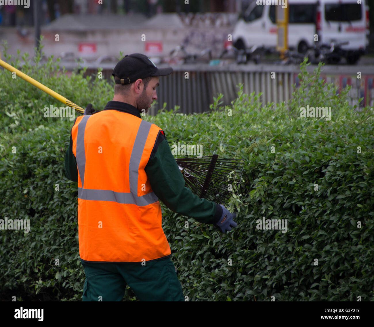 Photo of a gardener cropping plants - Stock Image