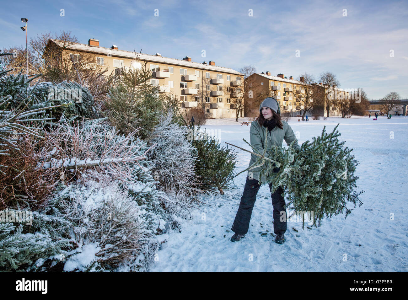 Sweden, Sodermanland, Johanneshov, Nytorps Garde, Young woman throwing out old Christmas tree - Stock Image