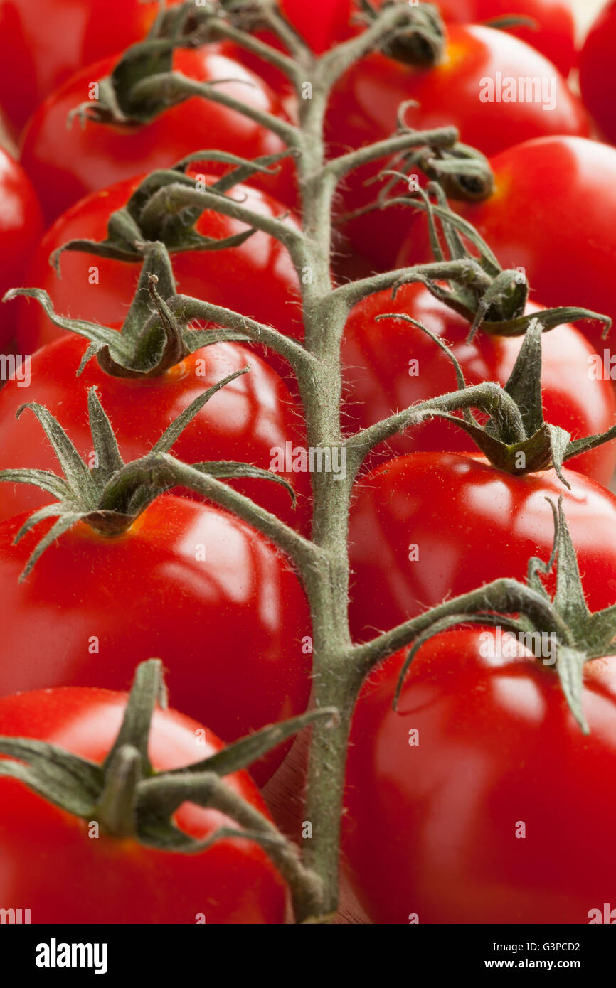 Vine with fresh ripe red cherry tomatoes - Stock Image