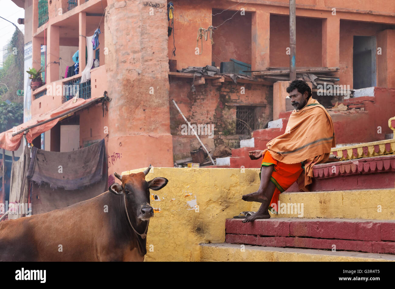 Unidentified Indian Sadhu with the sacred cow on the steps of the Kshameshwar Ghat in Varanasi. - Stock Image