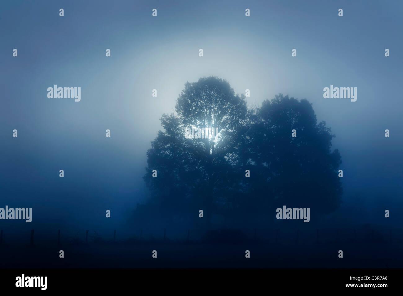 Sunrise shining through a tree at foggy morning, Lac du Der, Haute Marne, Franc. - Stock Image