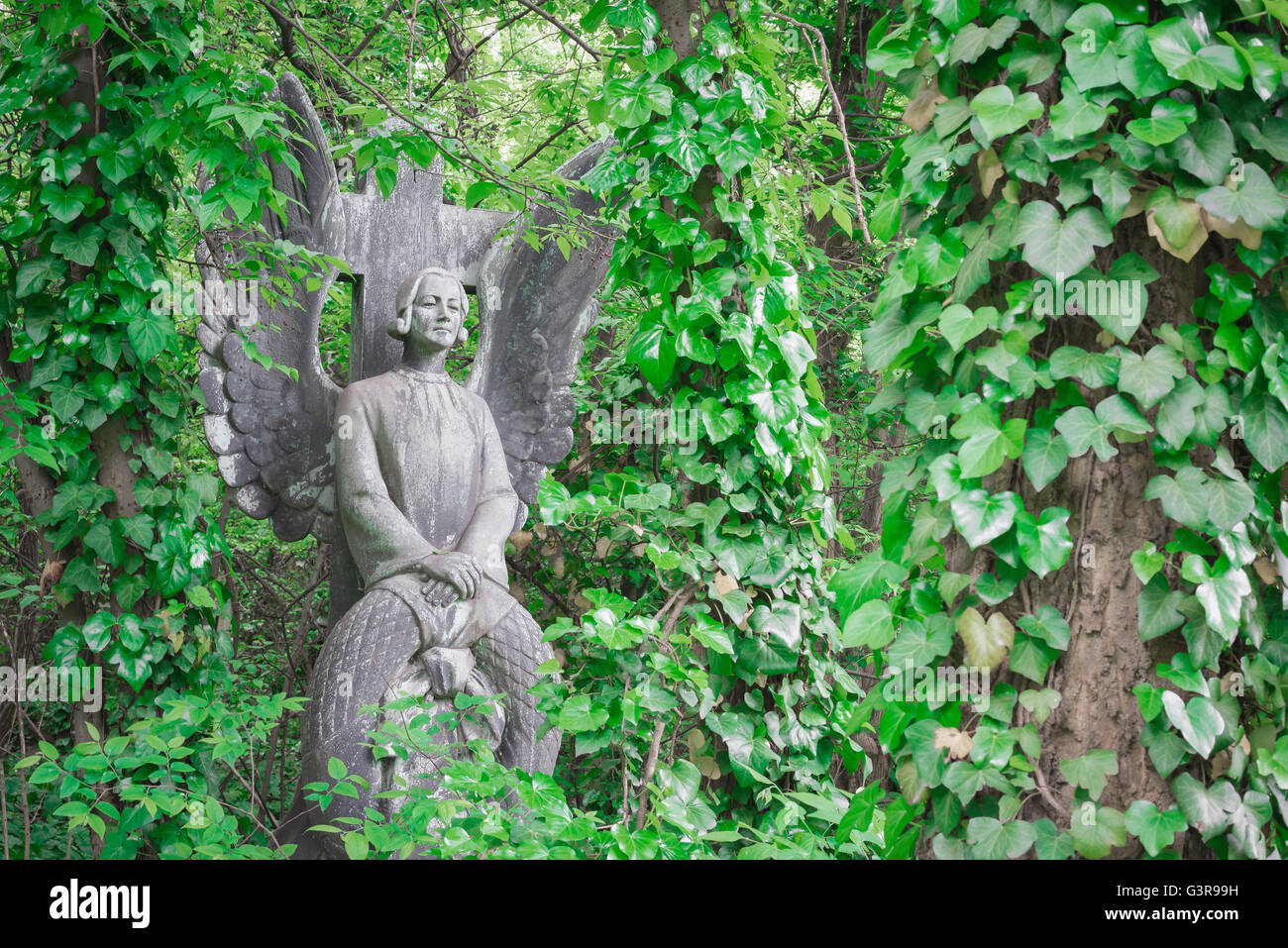 Budapest kerepesi, a stone angel that forms part of a grave overgrown by ivy in the Kerepesi Cemetery in Budapest, - Stock Image