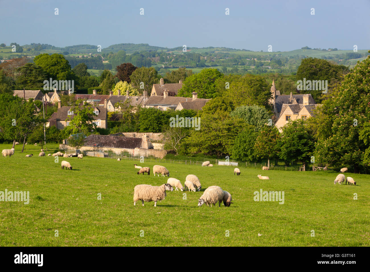 Grazing sheep with view over Cotswold village and landscape, Broad Campden, Cotswolds, Gloucestershire, England, - Stock Image