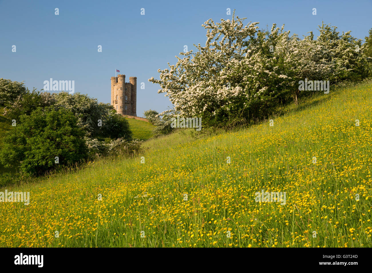 Broadway Tower with spring Hawthorn and Buttercups, Broadway, Cotswolds, Worcestershire, England, United Kingdom, - Stock Image