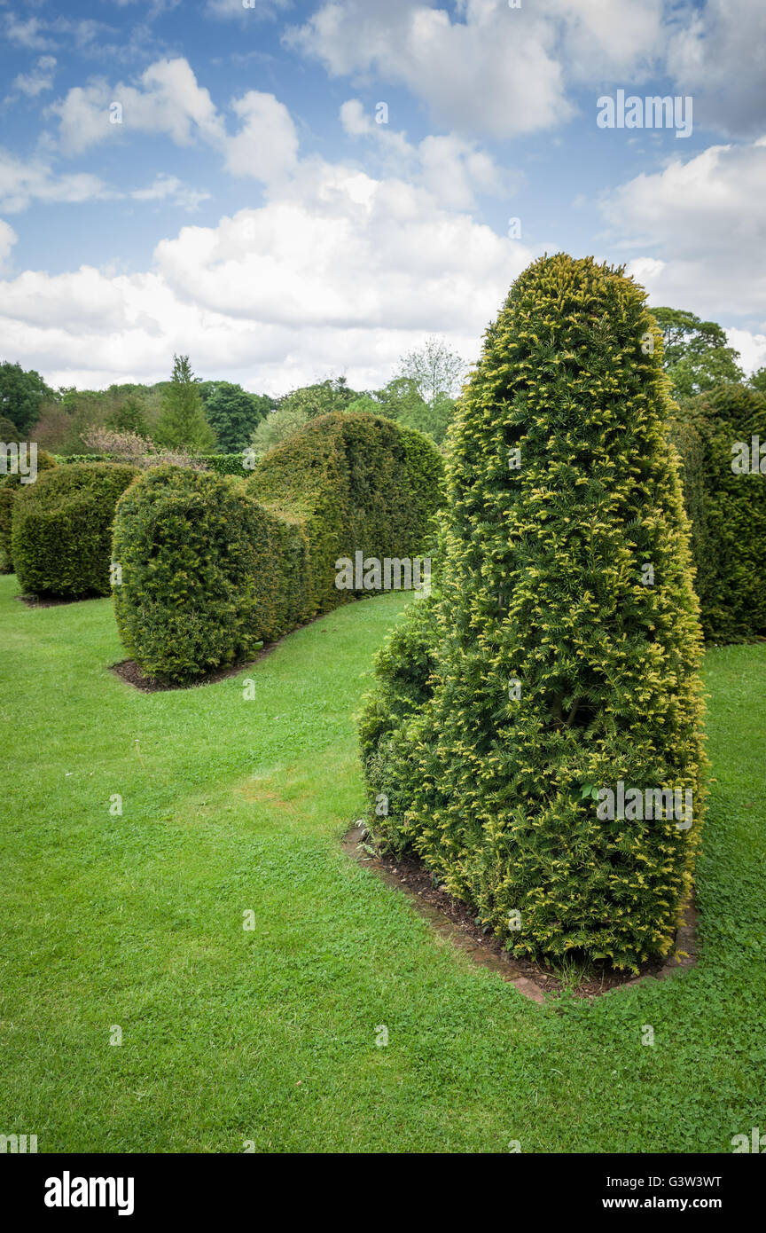 Clipped or Trimmed Hedge in a formal English garden. - Stock Image