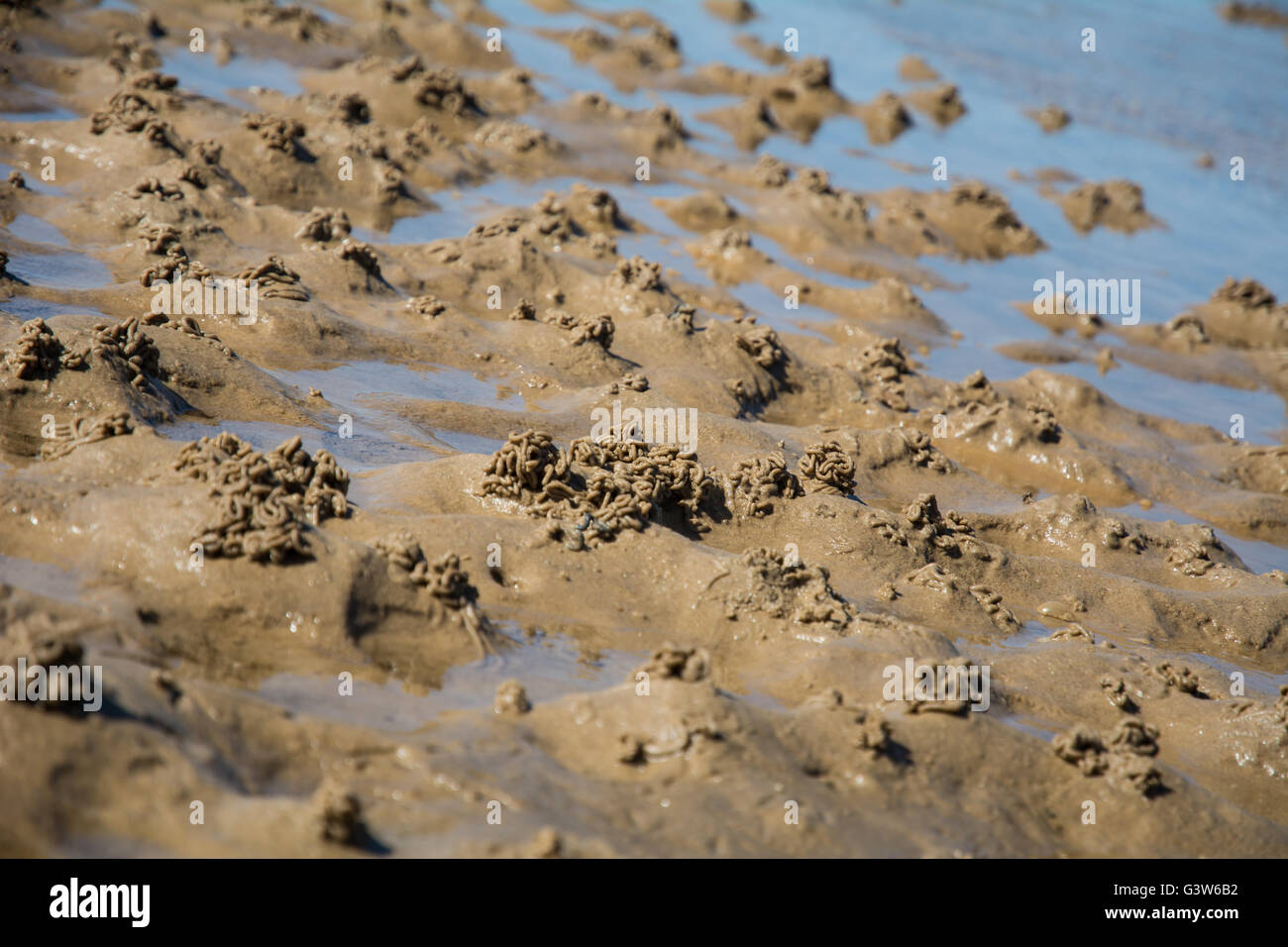 Worm castings on the sand from lugworms. - Stock Image