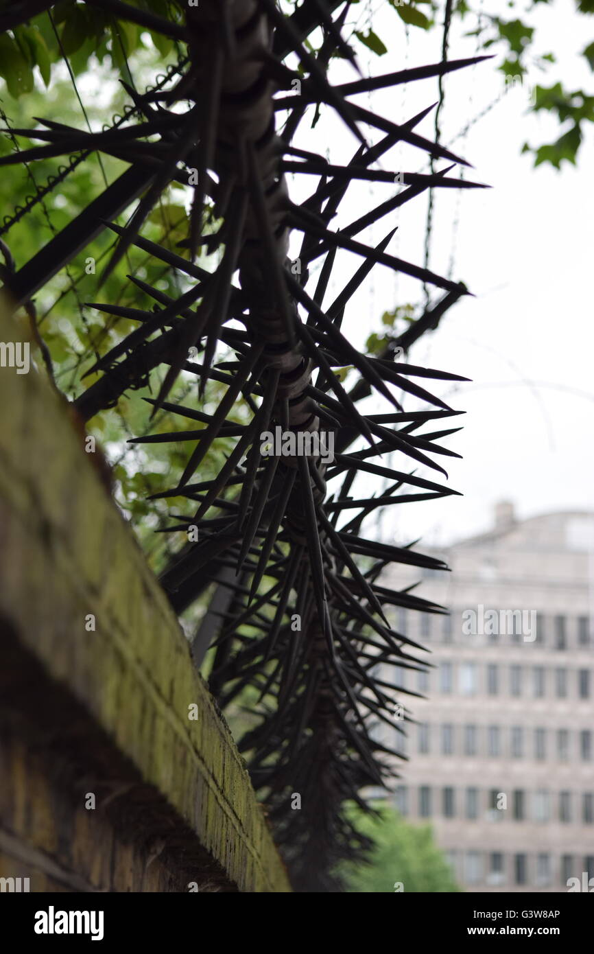 barb wire - Stock Image
