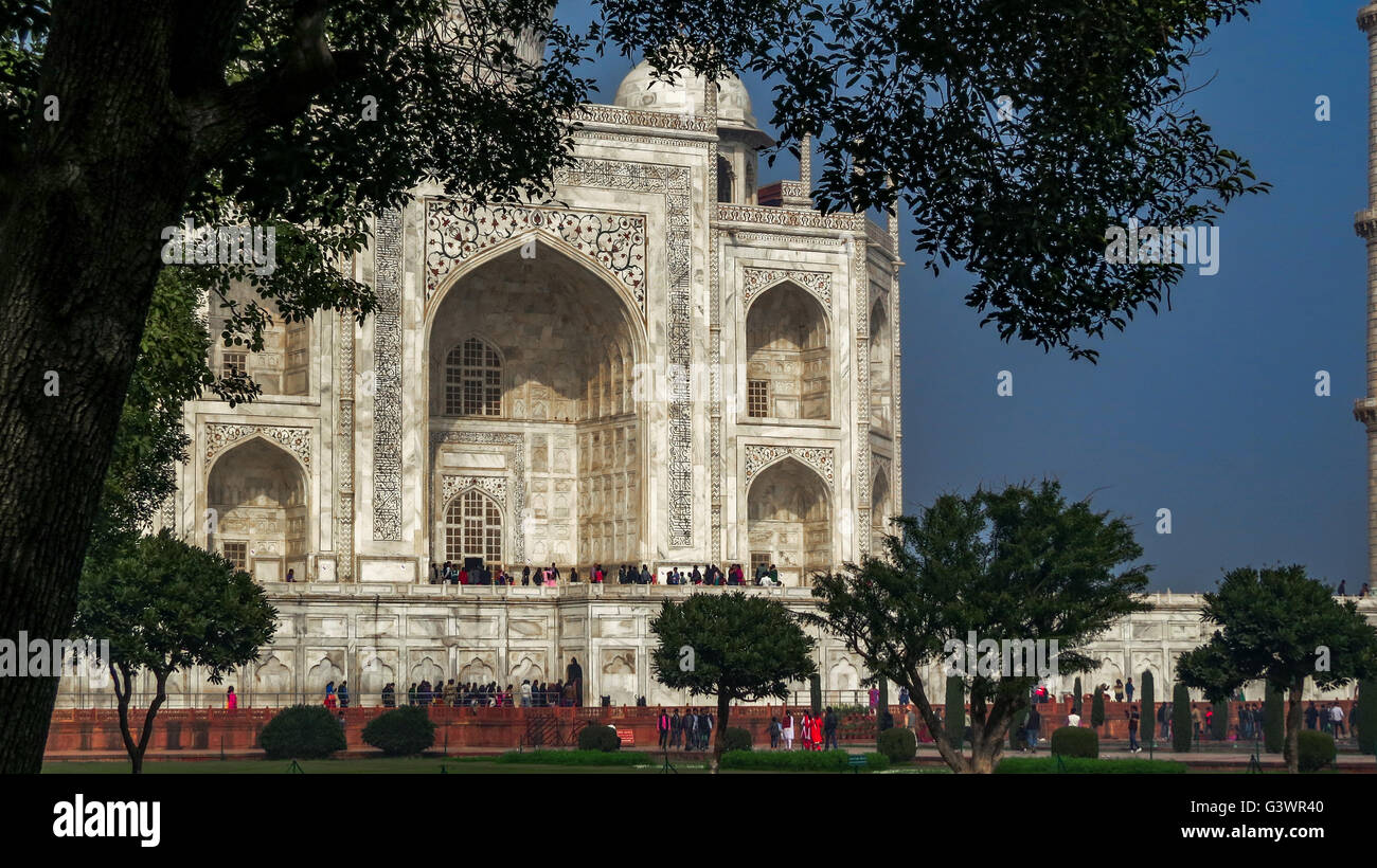 A Silhouette Of Trees Frame The View Of The Taj Mahal In