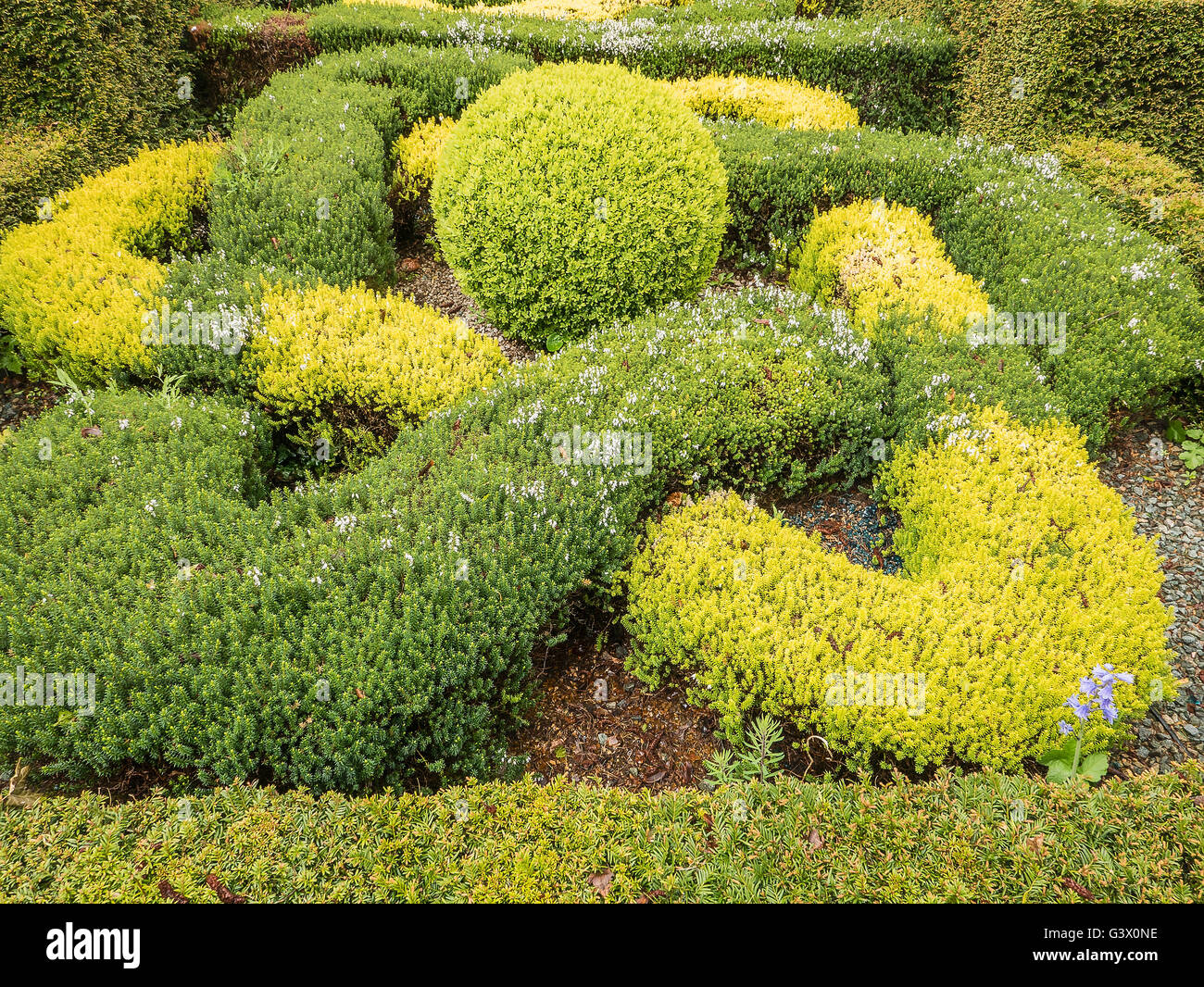 Enigmatic knot garden formed from box and erica plants Stock Photo
