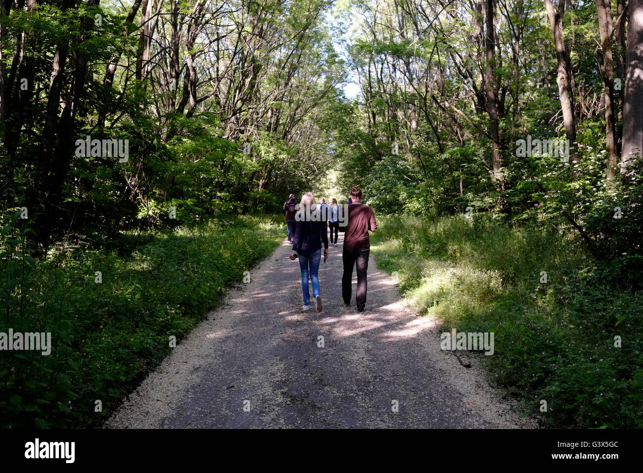 Group of tourists walking in a forest in Chernobyl, Ukraine on 04 June 2016. The Chernobyl accident occurred on - Stock Image